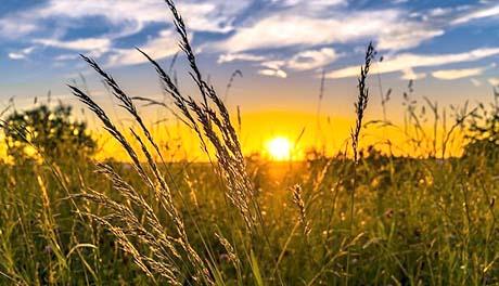 agrarpolitika