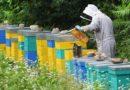 Kedvezőtlenül alakulhat az év a méhészek számára