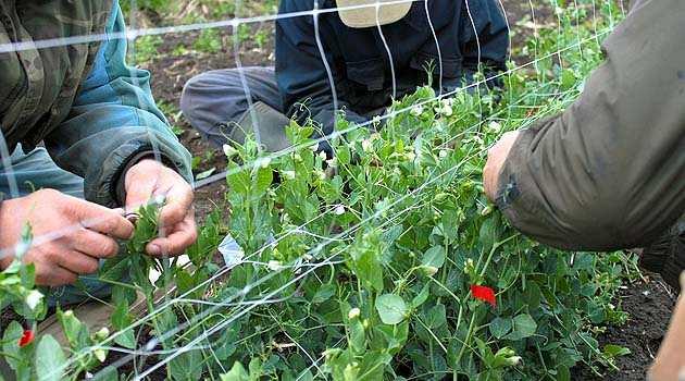 Fókuszban a növénynemesítés!