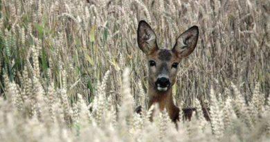 A vadgazdálkodónak és a gazdának közösen kell dönteni