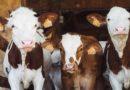 Már az Országgyűlés előtt az új állattenyésztési törvény