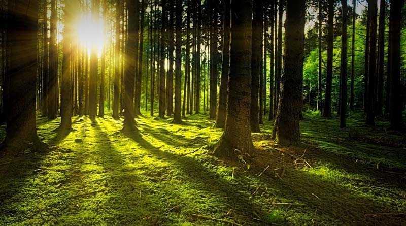 Növelték az erdőtelepítéshez igényelhető jövedelempótló támogatásokat