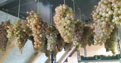 Szalmaborhoz töppesszünk szőlőt!